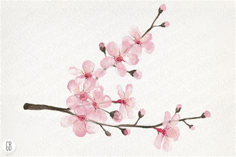 Tree Branch Decorations In The Home cherry blossom clipart no background