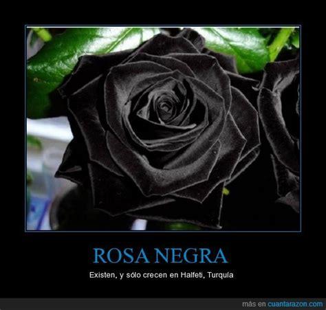 imagenes de rosas azules y negras 161 cu 225 nta raz 243 n rosa negra