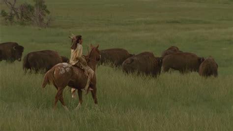 amerikanischer bison mittlerer westen usa - Amerikanischer Herd