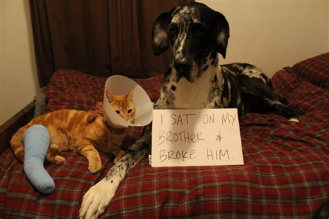 puppy shaming shaming really pictures collection on picshag