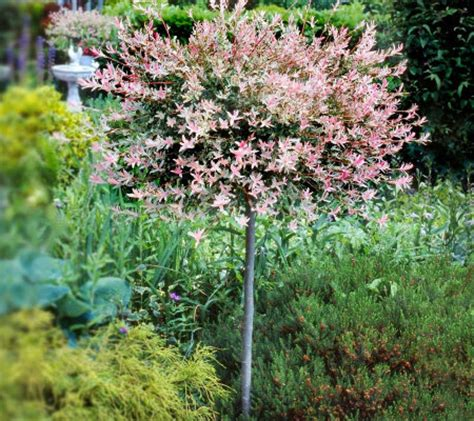 Patio Tree by Cottage Farms Flamingo Willow Patio Tree Page 1 Qvc