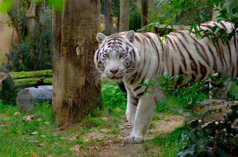 imagenes de animales zoologico jard 237 n zool 243 gico en lisboa 5 opiniones y 79 fotos