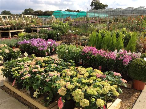 foundry plant centre garden centre norfolk norwich