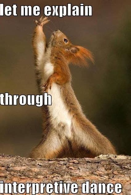 let me see you do the squirrel best 25 squirrel memes ideas on pinterest