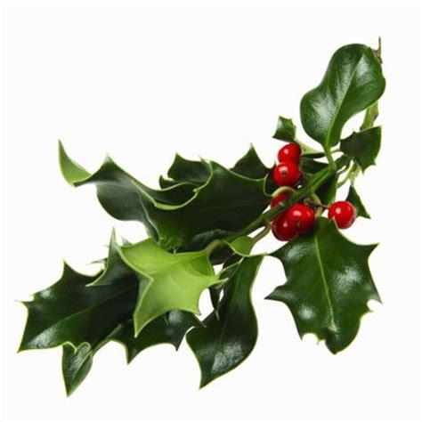 news magazine christmas mistletoe