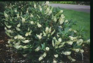 trees and shrubs for late summer flowers reflections from wandsnider landscape architects