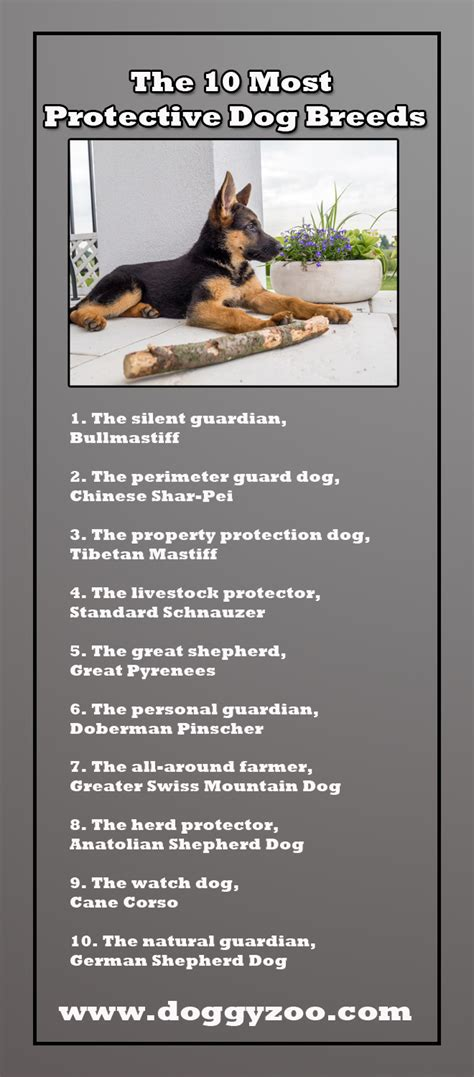 most protective breeds the 10 most protective breeds doggyzoo comdoggyzoo