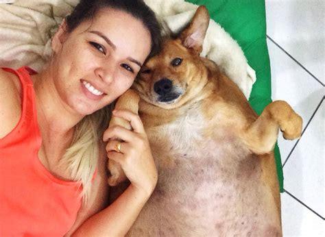 perro de coje a su duea conoce a bolinha la historia del perro obeso de brasil