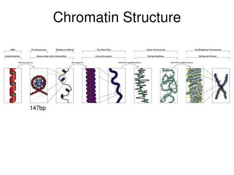 chromatin diagram ppt gene regulation powerpoint presentation id 1935438