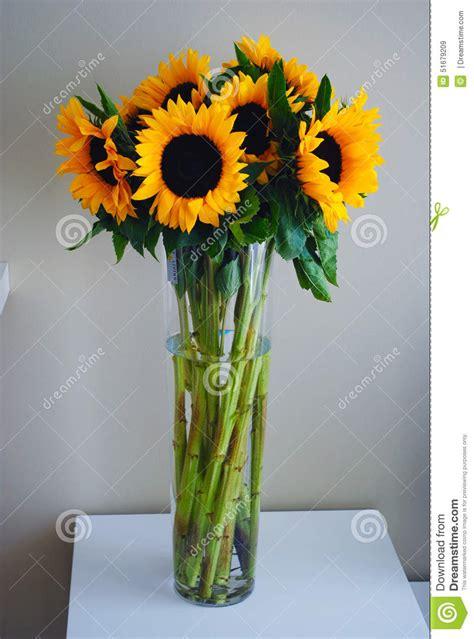 girasole in vaso girasoli in vaso immagine stock immagine di