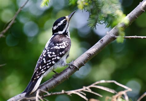 how to get rid of birds in backyard how to get rid of woodpeckers