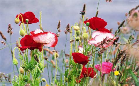 imagenes de jardines de flores hermosas imagenes flores hermosas fondo en hd para descargar 5 en