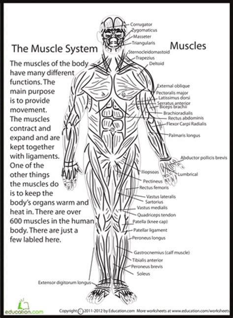 the system for part 4 doc lessons in betty neels happily after volume 4 books the human anatomy 5th grade worksheets education