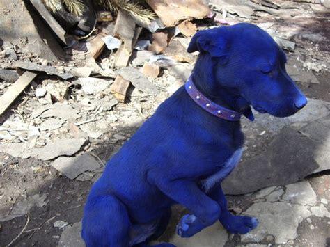 blue puppy blue 7 pics izismile