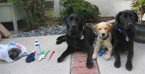 how often to let a puppy out at how often do you groom your puppy in