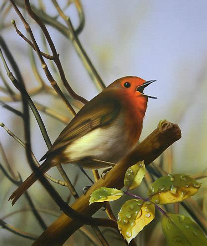 Cari Lukisan Cat Kaskus gambar ilustrasi gratis burung hantu lukisan cat air