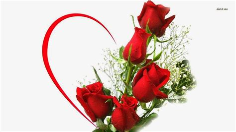 images of love rose flowers image gallery love red rose flower
