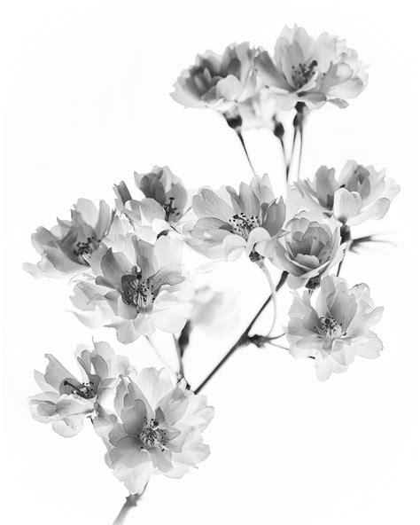 black and white cherry blossom tattoo cherry blossom black and white black white