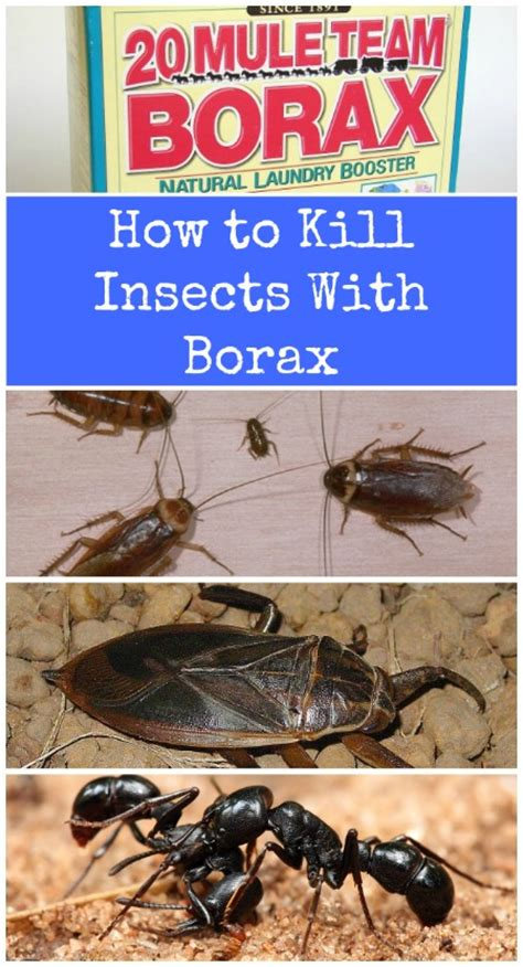 borax bed bugs top 10 most creative household uses for borax diy crafts