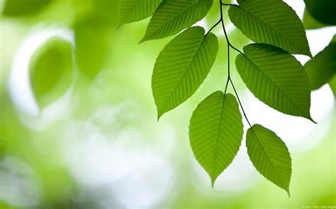 imagenes hojas verdes el cambio de color de las hojas
