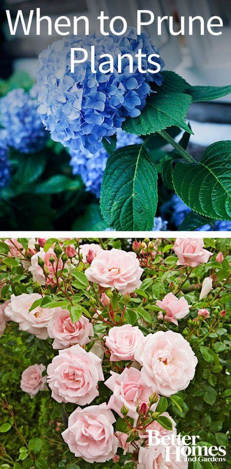 17 best images about sexy mexy landscaping on pinterest container gardening sweet potato
