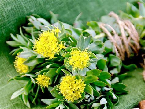 piante da terrazzo sempreverdi piante da balcone sempreverdi piante da terrazzo
