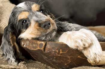 puppy daily schedule puppy care guide your new pup s daily schedule
