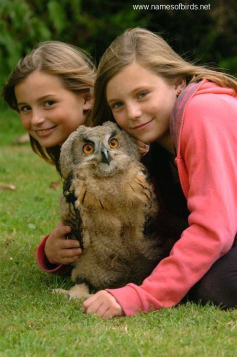 pet owl jpg 480 215 724 other owls with animals or people