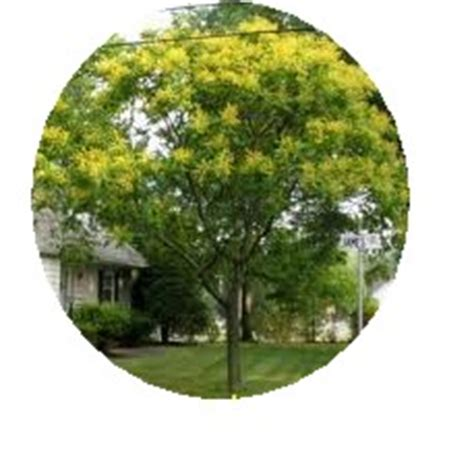 Elizabeth Winsby 15 family tree