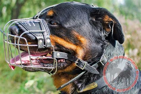 rottweiler cage size wire metal cage muzzle pit bull breed walking