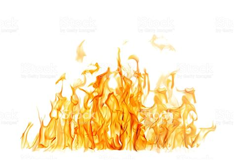 White Fireii and bright orange on white background stock