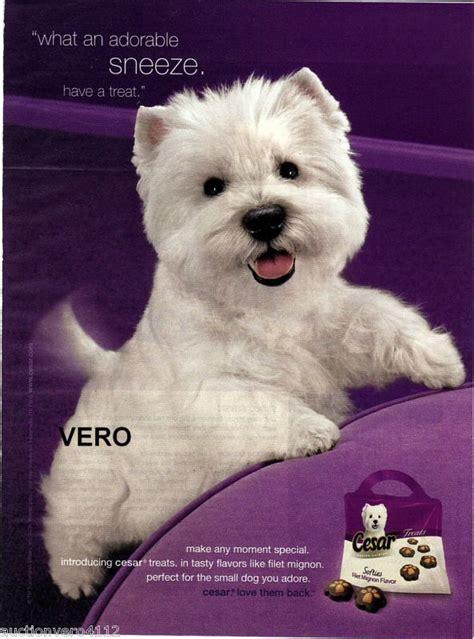 cesar puppy westie puppy food