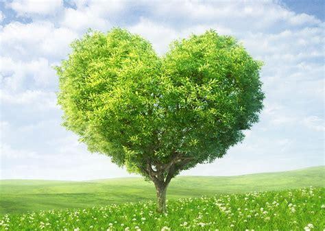 alimentazione ecosostenibile san valentino meglio se green ed ecosostenibile idee per