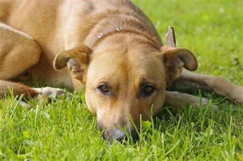 bloody diarrhea in dogs bloody diarrhea in dogs nzymes