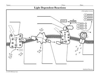 coloring book reaction light dependent reactions worksheet resultinfos