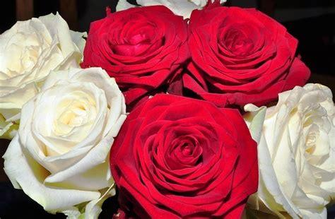 Obat Pembunuh Jamur Pada Kulit 14 gambar bunga mawar merah lengkap 2018 gambar pedia