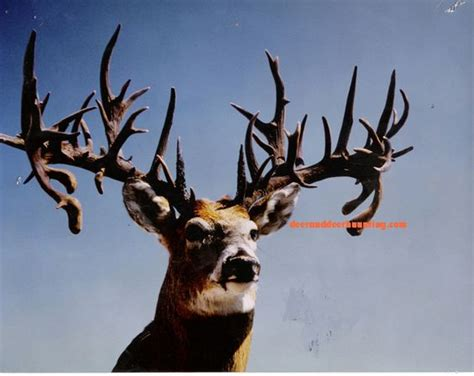 Stag Horn Chandelier Whitetail Bucks World Records And Antlers On Pinterest