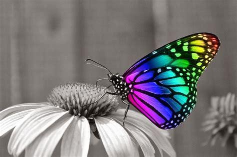 imagenes sobre mariposas informaci 243 n sobre la mariposa informacion sobre animales