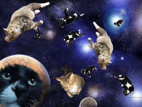 space cat wallpaper tumblr cats in space tumblr