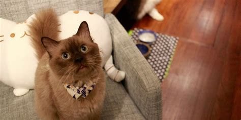 great    cat cafe  spore mothershipsg