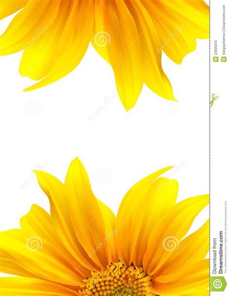 brochure layout flower design stock vector image 22836379