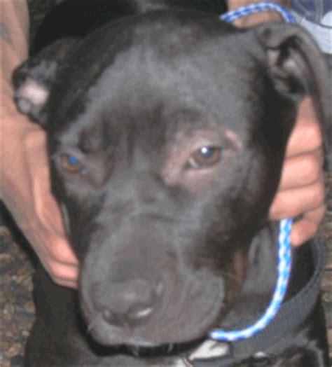 demodicosis in dogs demodectic mange mar vista animal center