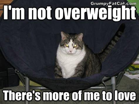 Fat Cat Meme - funny fat cat memes www imgkid com the image kid has it