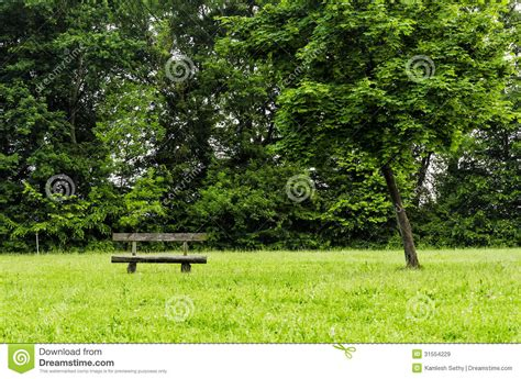 bench under tree bench under a tree royalty free stock images image 31554229