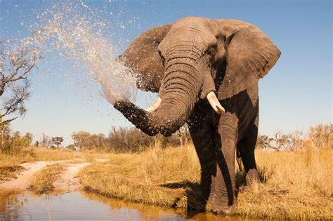 abstract elephant wallpaper hd elephant hd wallpaper