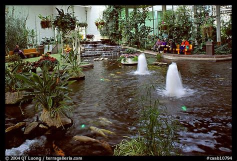 picturephoto indoor pond  garden calgary alberta