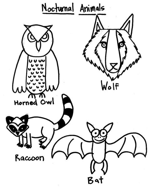 Pictures Of Nocturnal Animals Coloring Home Nocturnal Animal Coloring Pages