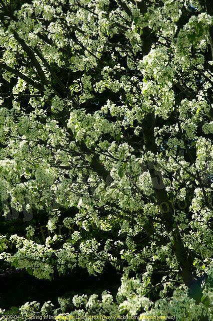 manfaat bagian pohon tumbuhan kina ramuan terapi herbal