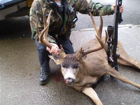 Oregon Records Illegal Big Buck Breezes To Boone And Crockett List Oregonlive