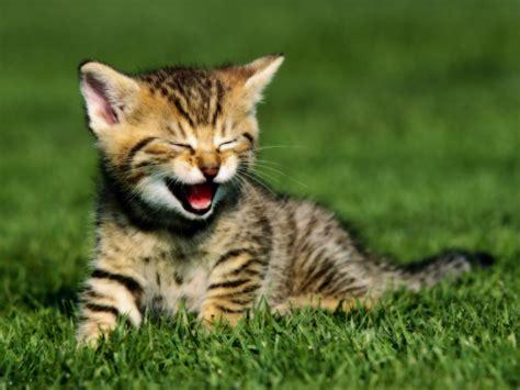 image hd wallpaper  cute cat hd wallpapersjpg lego